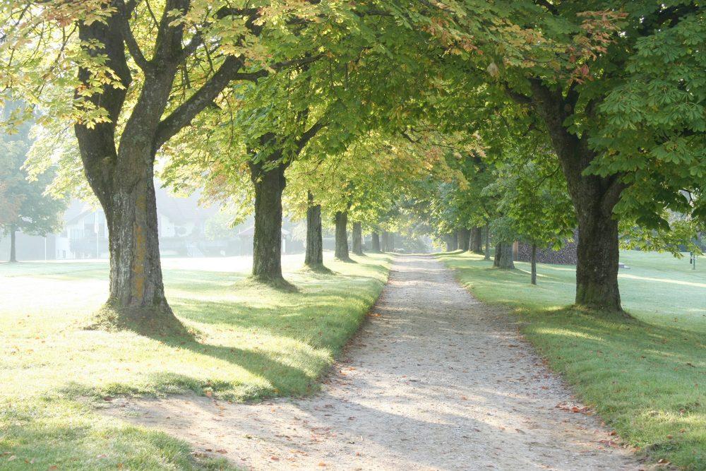 Allebaeume im Herbst
