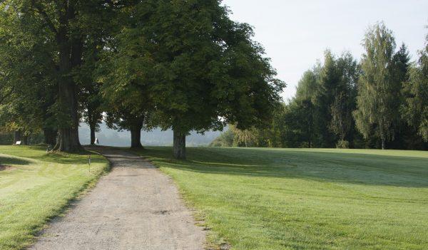 Blick auf eine grüne satte Wiese mit großen grünen Bäumen und einem Kiesweg