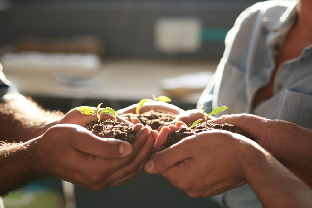 drei Menschen halten jeweils Erde und eine Planze in den Händen, unternehmerisches engagement der IWL